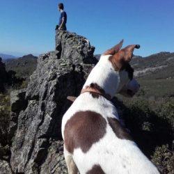 Perro de caza, la mejor compañia