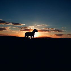 Sunset dog