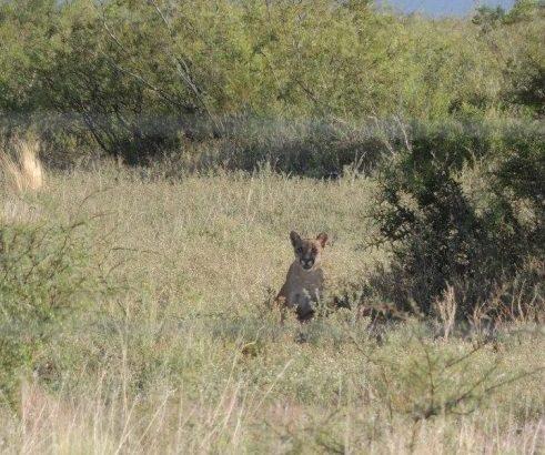 Venta de campo ganadero con coto de caza Argentina