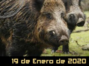 Montería Finca «La Perdicilla» 19/01/2020