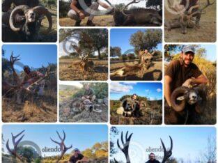 Rececho: gamo, mufón y ciervo